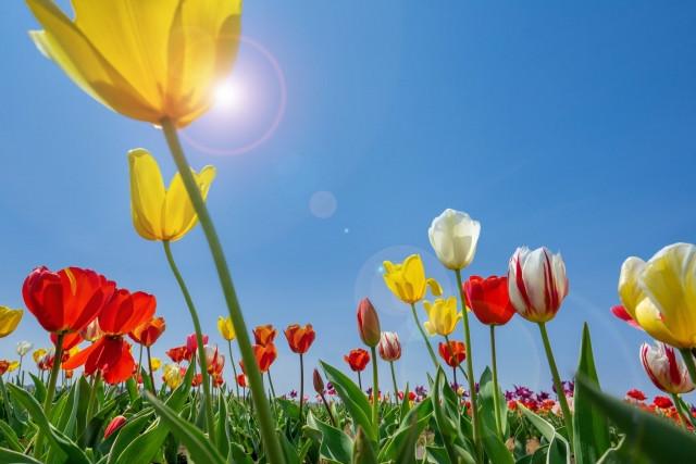 季節の変わり目(春)